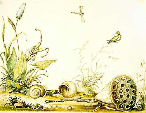 Bartram's Travels Nature Illustration