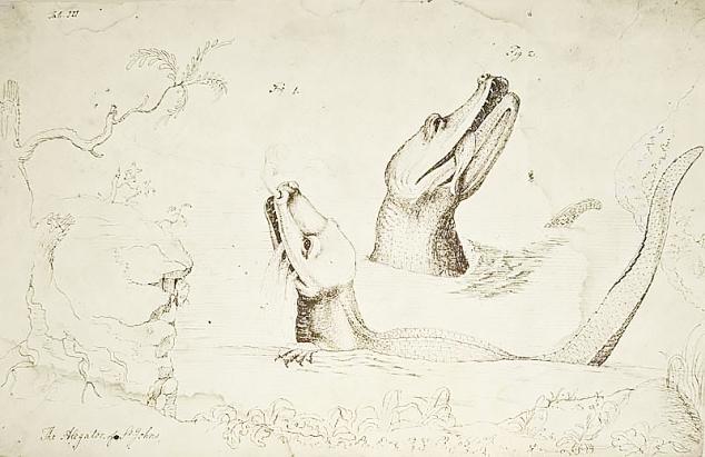 Bartram Alligator Illustration